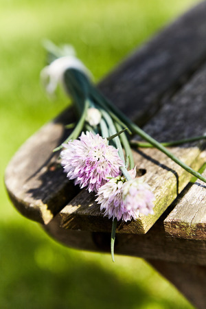 Bunch of purple onion flowers on the edge of an old wooden bench in selective focus