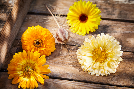 Four colorful golden yellow and orange ornamental spring flowers on a rustic wooden crate background symbolic of the new season in a close up high angle view Imagens