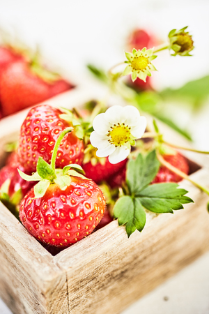 Close-up on delicious fresh organic strawberries in wooden tray from country market with white flower in selective focus Imagens