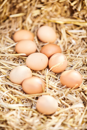 Ten fresh brown hens eggs scattered on straw with selective focus to the centre in a concept of healthy fresh food and diet Stock Photo