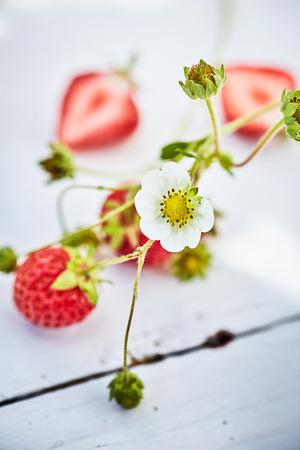 Fresh strawberries, whole and cut in half and white strawberry plant flower on painted wooden table viewed in close-up and selective focus Imagens