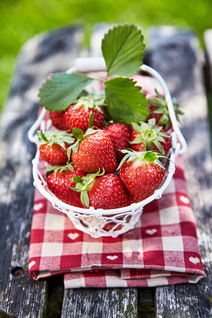 Small white basket filled with ripe red home grown strawberries on a folded, napkin outdoors on a rustic wooden table in the garden