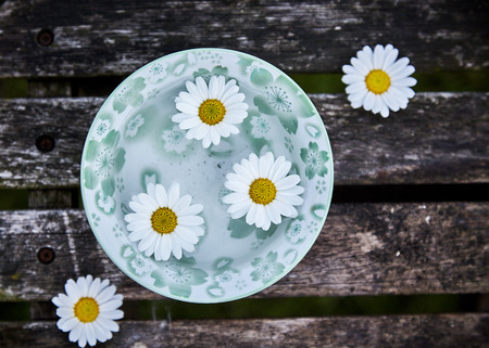 Five fresh white marguerite daisies symbolic of spring on a green patterned plate on a rustic wooden bench or table viewed from above with copy space