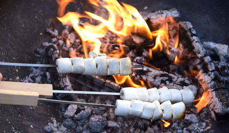 Person toasting three skewers of white marshmallows over the hot coals of a barbecue fire during a summer picnic in a close up view on the candy Reklamní fotografie