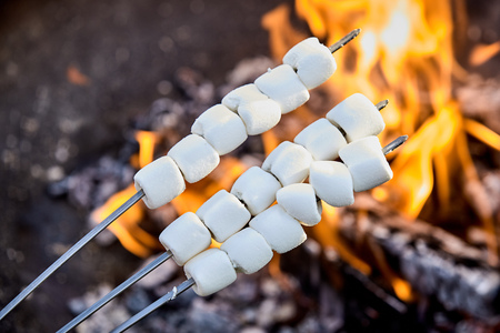 Three metal skewers of threaded white marshmallows ready for toasting being held over a hot fire with flames and coals
