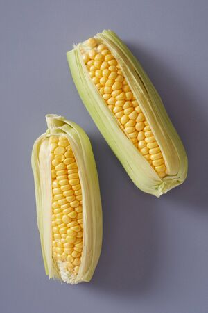 Two fresh corns with outer leaves on a grey background
