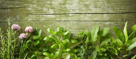 Fresh culinary herbs on old vintage weathered green wood with copy space Reklamní fotografie