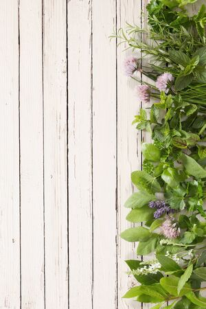Fresh aromatic culinary herbs and edible flower vertical border on a rustic white painted wood background with copy space Stock Photo
