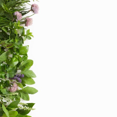 Large assortment of culinary herbs isolated on white arranged with edible flowers as a side border with copy space Фото со стока