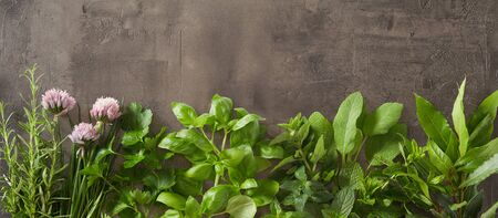 Panorama banner with a variety of fresh herbs and edible flowers for cooking and garnishes on textured grey slate with copy space