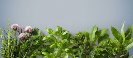 Fresh culinary herbs and flowers over blue-grey background with copy space