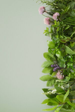 Fresh healthy culinary herb assortment with edible flowers arranged as a right side vertical border on a green background with copy space