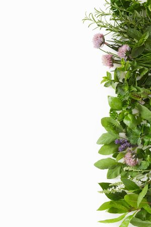 Side border of assorted fresh culinary herbs including, sage, mint, coriander, basil, rosemary isolated on white with vertical copy space Reklamní fotografie
