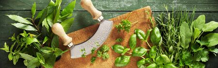 Mezzaluna knife on a wooden chopping board with assorted fresh aromatic culinary herbs in a wide angle panorama