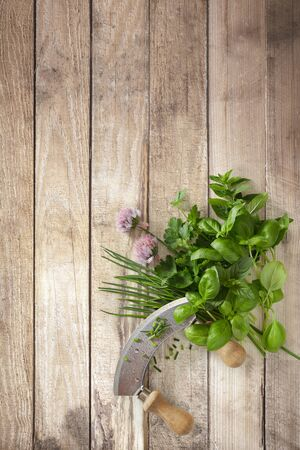 Assorted fresh herbs and mezzaluna knife on a rustic wood background arranged to the corner with copy space Reklamní fotografie