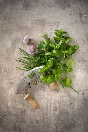 Fresh assortment of aromatic culinary herbs with a mezzaluna knife for chopping on a grunge textured grey background with copy space