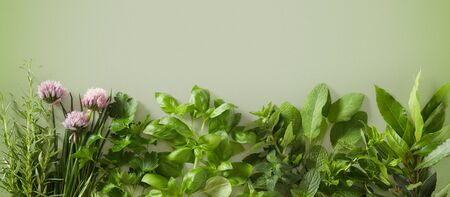 Row of assorted fresh culinary herbs and the edible flower of chives on green in a panorama banner or header format with copy space