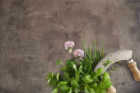 Healthy fresh herbs with basil, chives, flowers, mint and coriander with a mezzaluna knife on a textured grey grunge background with copy space
