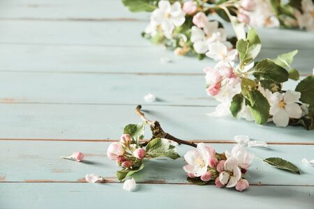 Scattering of fresh pink apple blossom on rustic white wood with copy space conceptual of the spring season