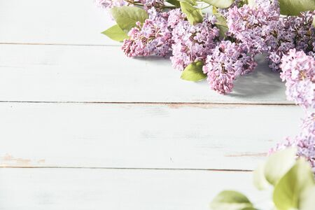 High key banner with sprays of fresh lilac blossom forming a corner border with copy space on white wood conceptual of the spring season