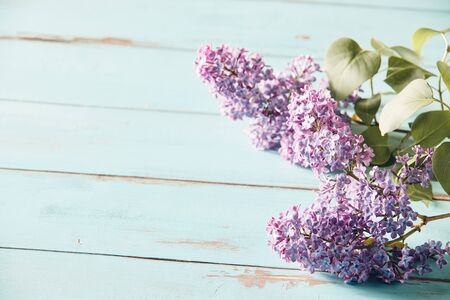 Delicate purple inflorescences of spring lilac or syringa arranged to the side on rustic blue wood with copy space