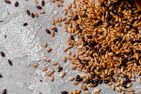 Malted grain closeup. Mixed varieties of malted grain on a gray Stockfoto