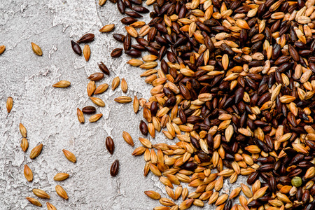 Malted grain closeup. Mixed varieties of malted grain on a gray Archivio Fotografico