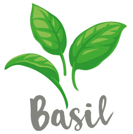 Basil Leaves flat graphic illustrations, fully adjustable and ideal for Italian pasta sauce, pesto labels etc. Ilustração