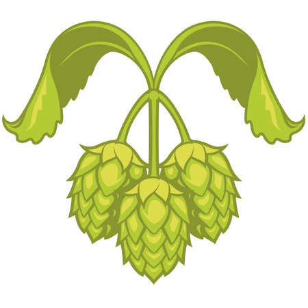 Hops visual graphic icon, ideal for beer, ale, lager, bitter labels and packaging etc.