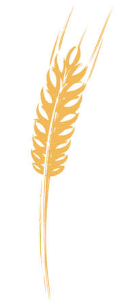 Ear of Wheat, Barley or Rye hand painted brush and ink vector illustration graphic icon Imagens