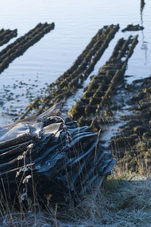 Oyster bed Stock Photo - 15917794