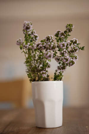 Flowering thyme Stock Photo - 15987401