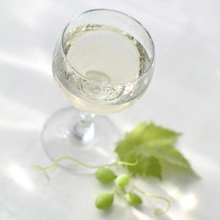 muscadet: A glass of Muscadet