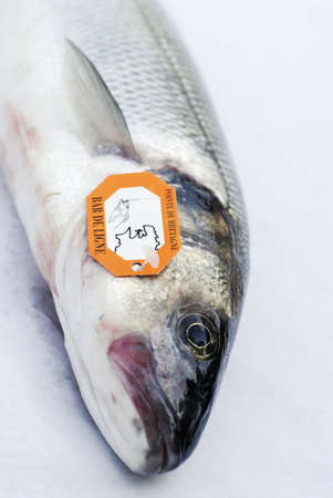 Raw bass Stock Photo - 17026847