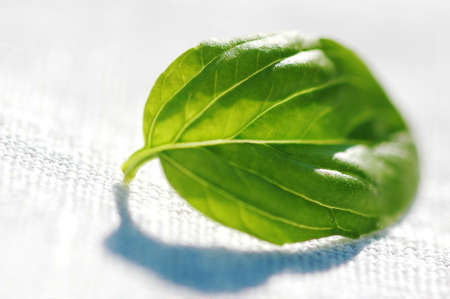 Basil leaf Stock Photo - 17026000
