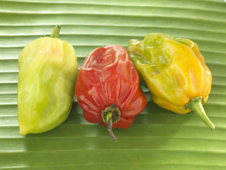 Peppers Stock Photo - 17027514