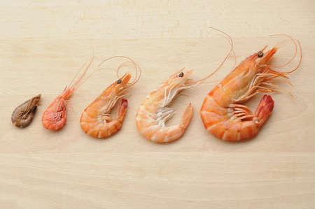 alignement: Shrimp composition