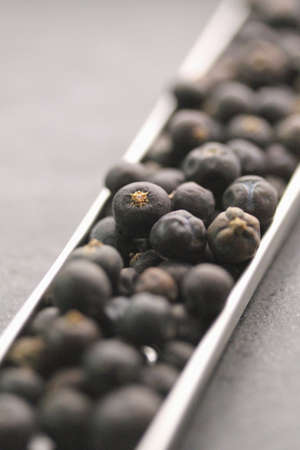 Juniper berries Stock Photo - 17028704