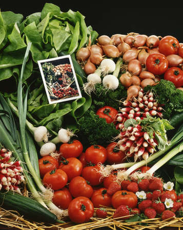 Vegetable composition Stock Photo - 17028913