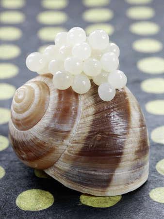 Snail shell and caviar