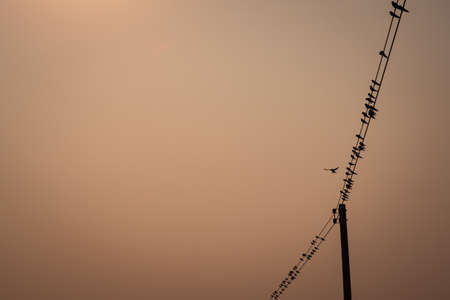electric line: Flock of Bird over Electric Line