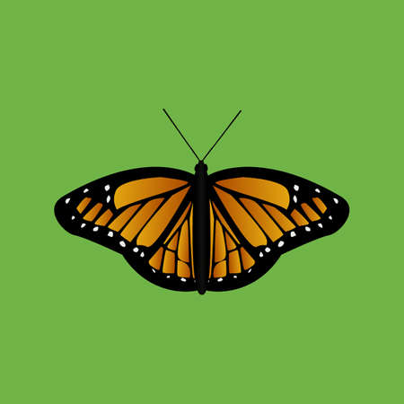 butterfly on green background