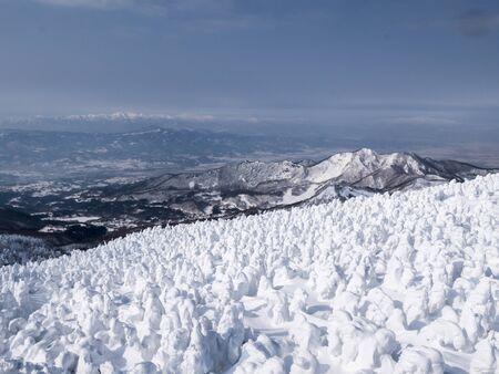 splendid: splendid view over snow covered trees