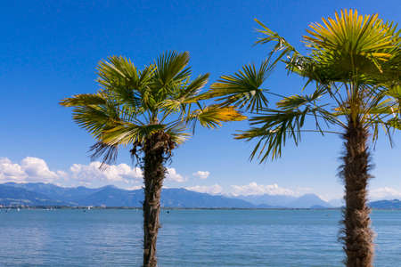 Palm trees on the promenade in Lindau, Lake Constance, Swabia, Bavaria, Germany, Europe