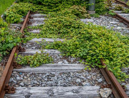 Overgrown rails of a disused railway line, Munich, Bavaria, Germany, Europe Stock fotó