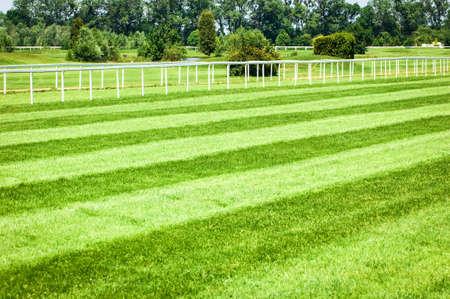 Gras an einem Pferderennbahn - schönen Hintergrund mit Platz für Text Standard-Bild