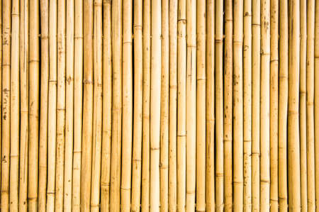 bamboo closeup - nice background pattern photo