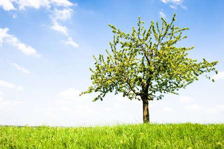リンゴの木は牧草地で
