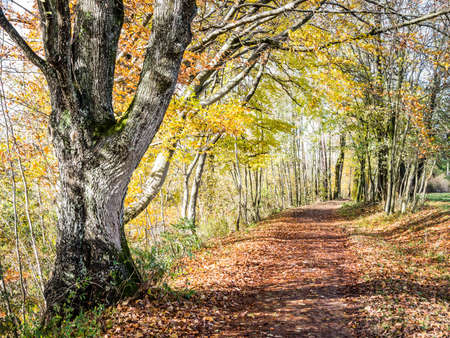 footpath at a forest - nice background Stock Photo