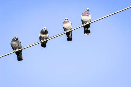 four doves sitting at a wire photo